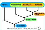 American Museum of Natural History, vertebrates