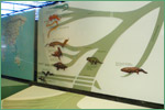 American Museum of Natural History, amphibians