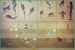American Museum of Natural History, primates