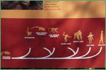 Denver Zoological Foundation, primates