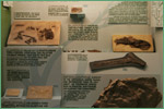 Exhibit Museum of Natural History, University of Michigan, teleosts