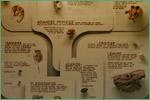 Exhibit Museum of Natural History, University of Michigan, primates