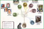 Explore Evolution, HIV virus