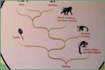 The Field Museum, primates