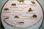 The Field Museum, synapsids