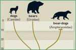 Florida Museum of Natural History, mammals