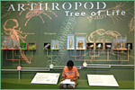 Harvard Museum of Natural History, arthropods1