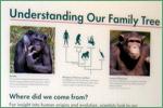 Harvard Museum of Natural History, primates