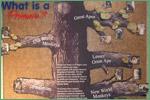 Henry Doorly Zoo, primates