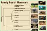 International Wildlife Museum, mammals