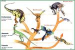 University of Kansas Natural History Museum, dinosaurs and birds