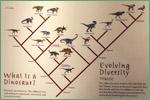 North Carolina Museum of Natural Sciences, dinosaurs
