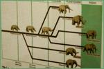 Raymond M. Alf Museum of Paleontology, elephants and close relatives