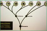 Sam Noble Oklahoma Museum of Natural History, dinosaurs