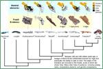 University of California Museum of Paleontology, fish and other vertebrates