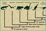 University of California Museum of Paleontology, dinosaurs and other vertebrates